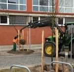terminic Ein Baum für bremen